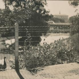 Wild things: The history of Parramatta Zoo